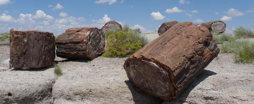 Versteinerter Baum im Petrified Forest