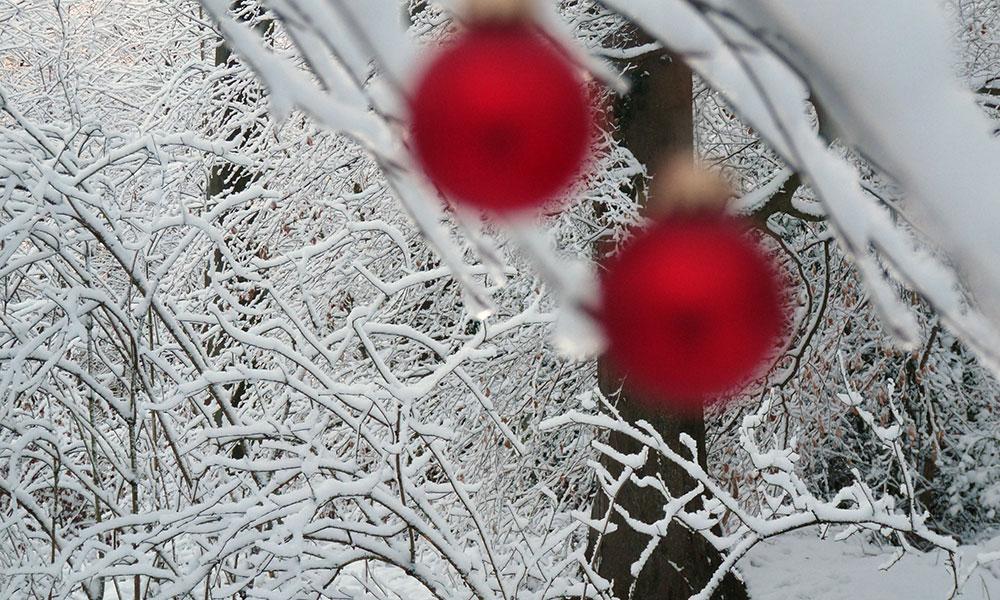 Unscharfe Christbaumkugeln mit scharfem Baum im Hintergrund