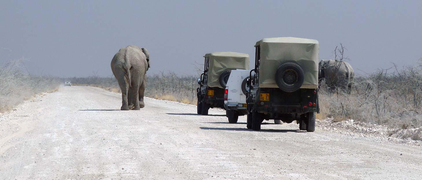 Elefant auf Straße vor Autos im Etosha Nationalpark