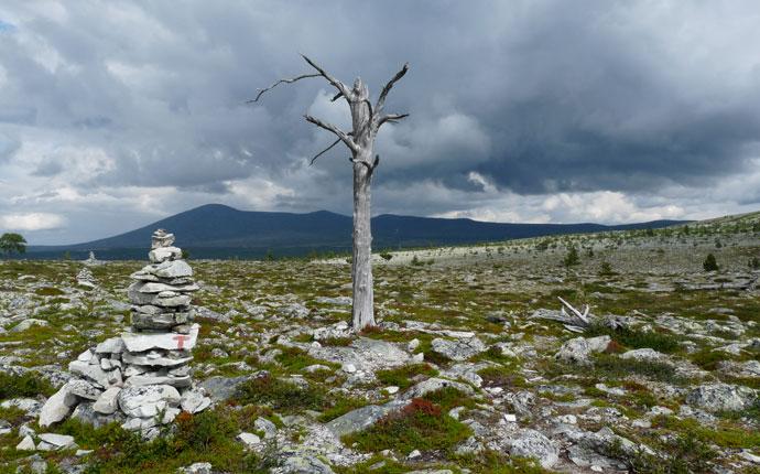 Norwegen Tipp: Baum auf Steinfeld