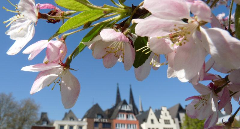 Lauschige Orte Köln