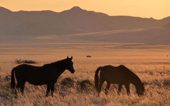 Namibia Aus Wildpferde