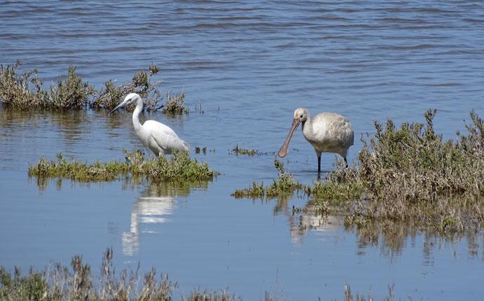 Vögel Riserva Vendicari Sizilien