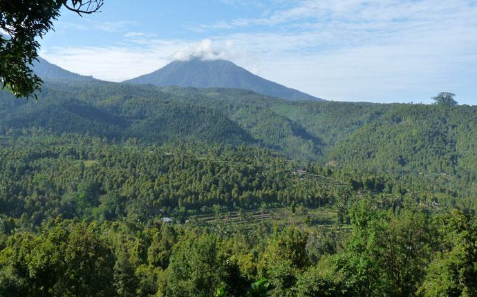 Bali Nelkenwälder Munduk