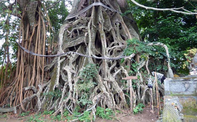 Bali Banyan Baum