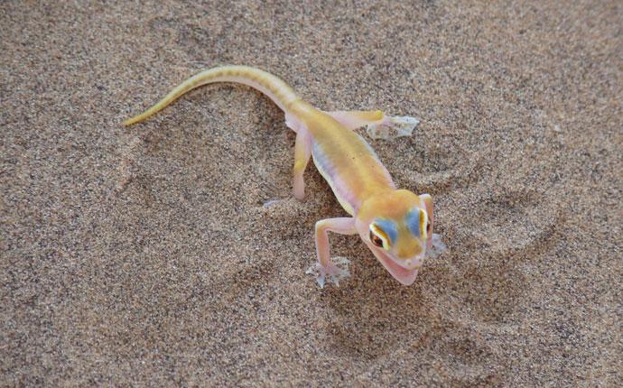 Little Five Swakopmund, Namibia