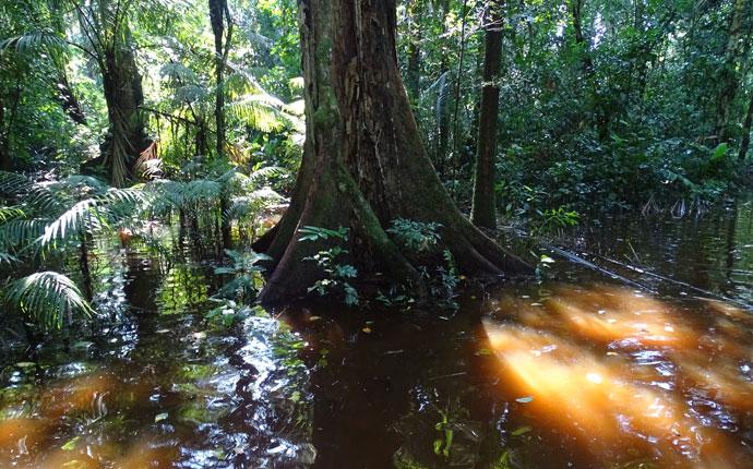 Regenwald5
