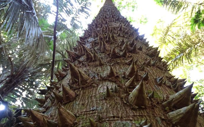 Im Regenwald in Bolivien