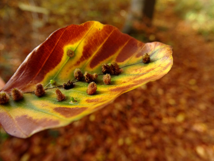 Herbst Königsdorfer Wald