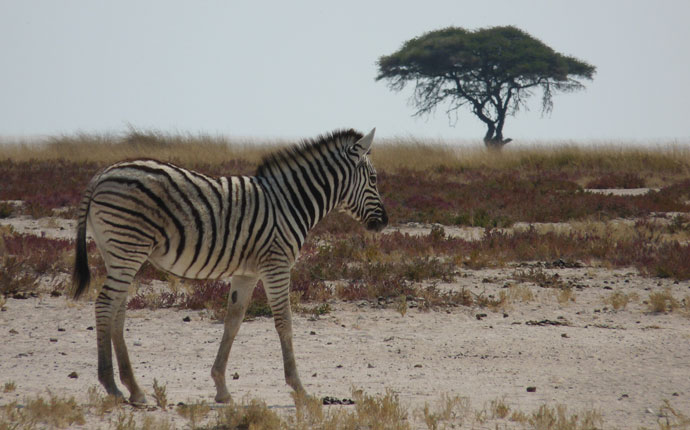 Zebra Game Park Südafrika