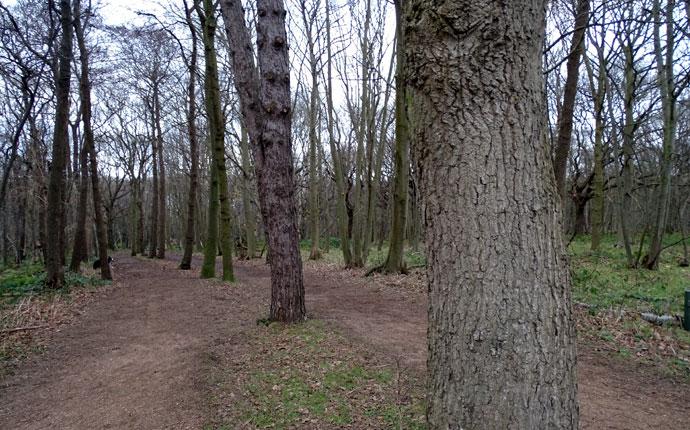 Silvester in Zeeland Oostkapelle Wald