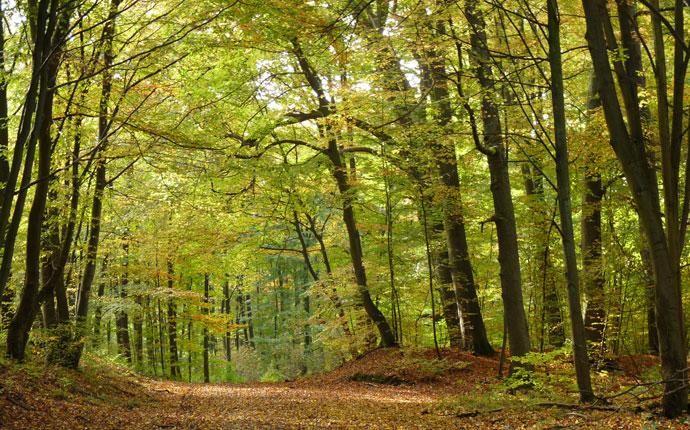 In der Natur im Wald