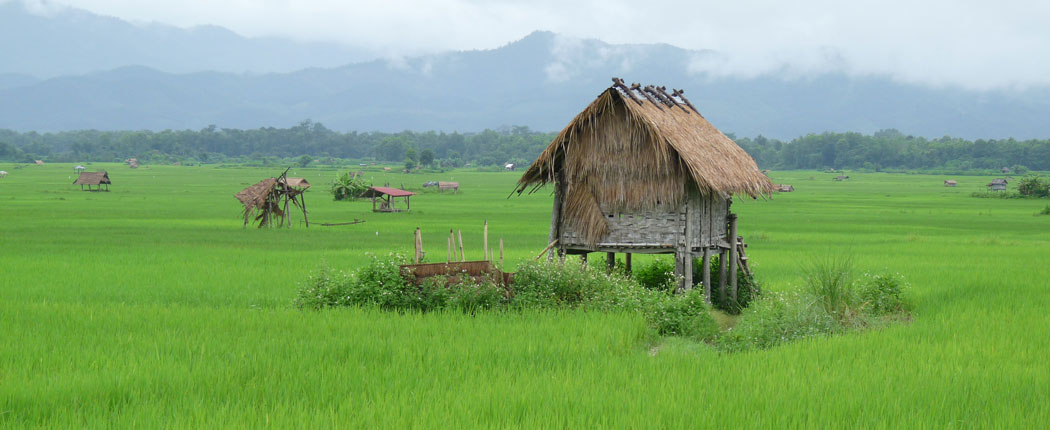 Reisfelder Luang Namtha