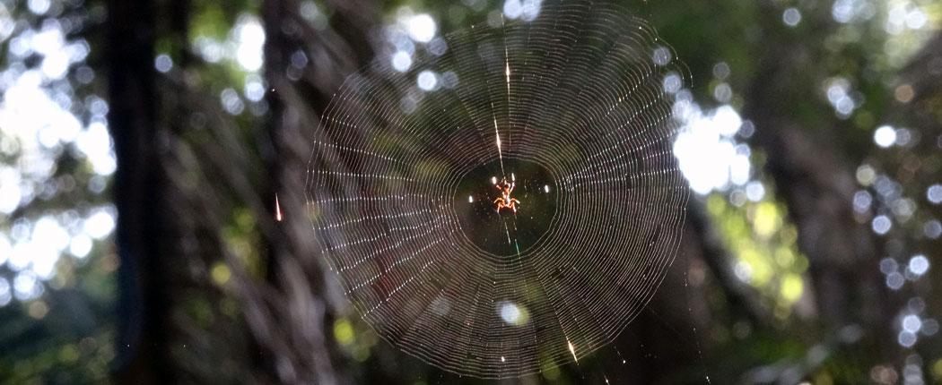 Spinnennetz im Regenwald