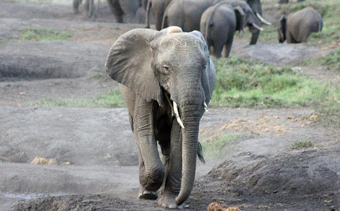 tembe-elephant-park