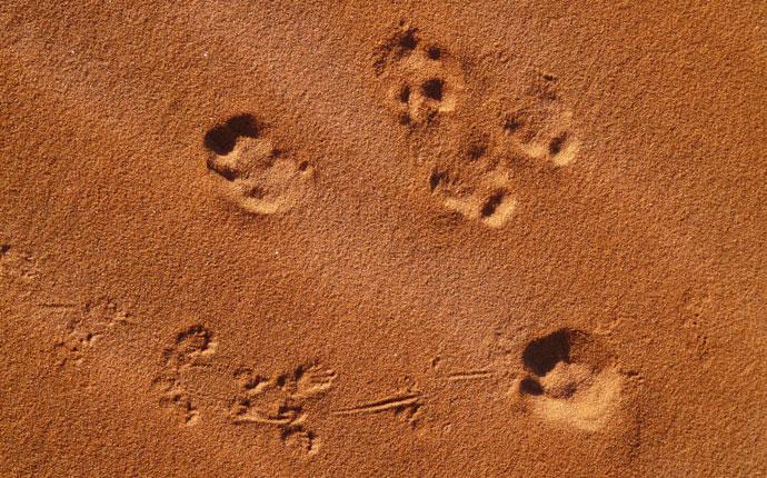 Spuren im Sand an der Elim-Düne im Sossusvlei