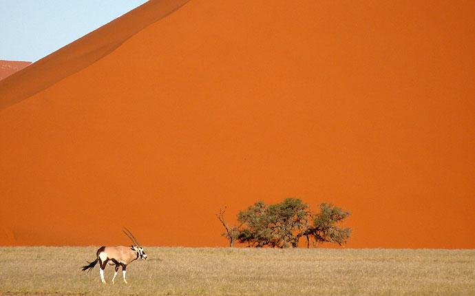 Oryx vor einer Düne im Sossusvlei, Namibia