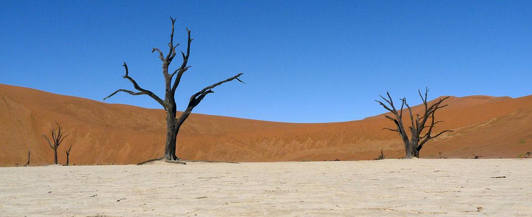 Abgestorbene Bäume in der Salzpfanne am Sossusvlei