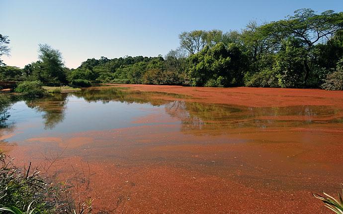 Der Birdpool im Mlilwane Wildlife Sanctuary