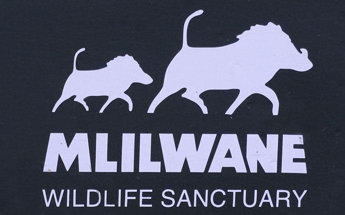 Das Logo mit Warzenschweinen des Mlilwane Wildlife Sanctuary