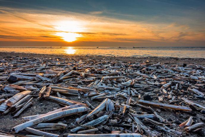 Muscheln im Sonnenuntergang am Strand