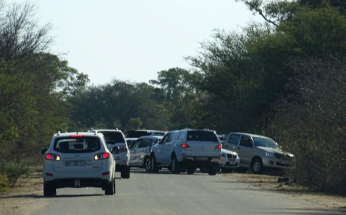 Stau im Krüger Nationalpark