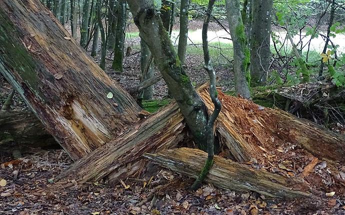gebrochener Baumstamm imWald
