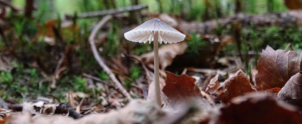 Einzelner Pilz im Wald