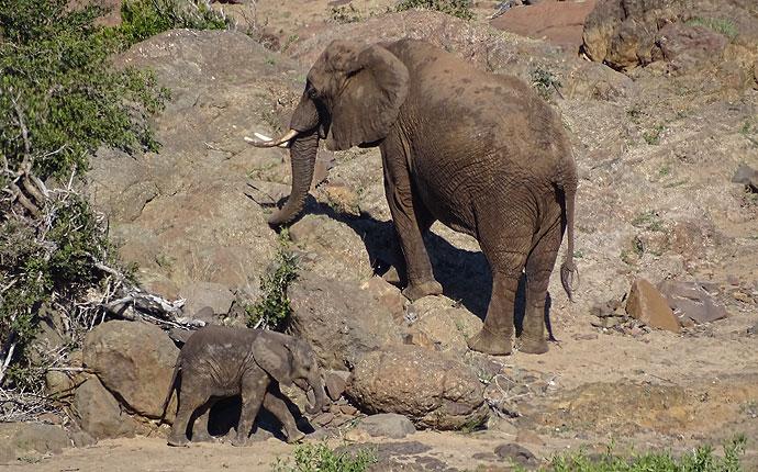 Elefant mit Baby auf der Selbstfahrer-Safari