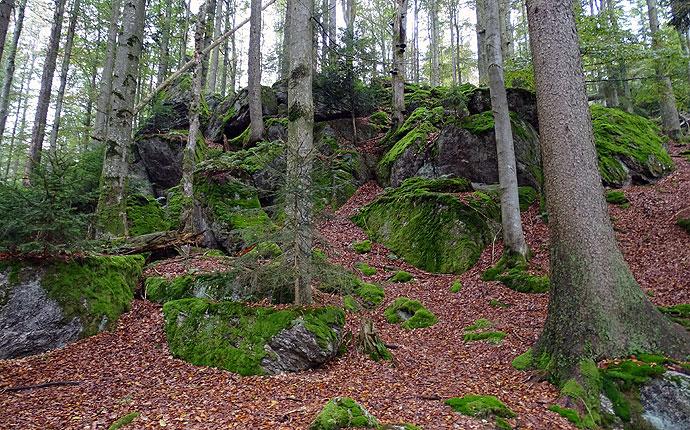 Ein Wald voller Felsen