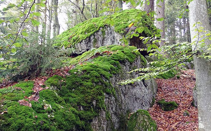 Im Wald: Moos auf Felsen
