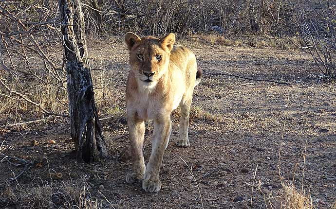 loewe-suedafrika