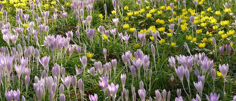 Frühlingsblumen auf der Wiese