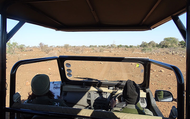 Fahrt im Jeep durch den Krüger Nationalpark