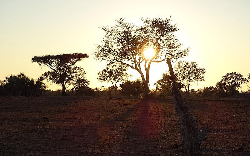 Sonnenaufgang hinter Bäumen im afrikanischen Busch