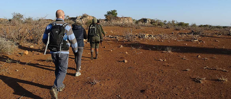 Morning Walk im Krüger Nationalpark