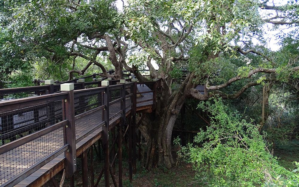 Holzweg zum Baum im iSimangaliso Wetland Park