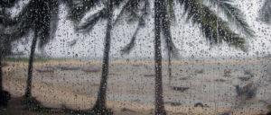 Palmen im Regen