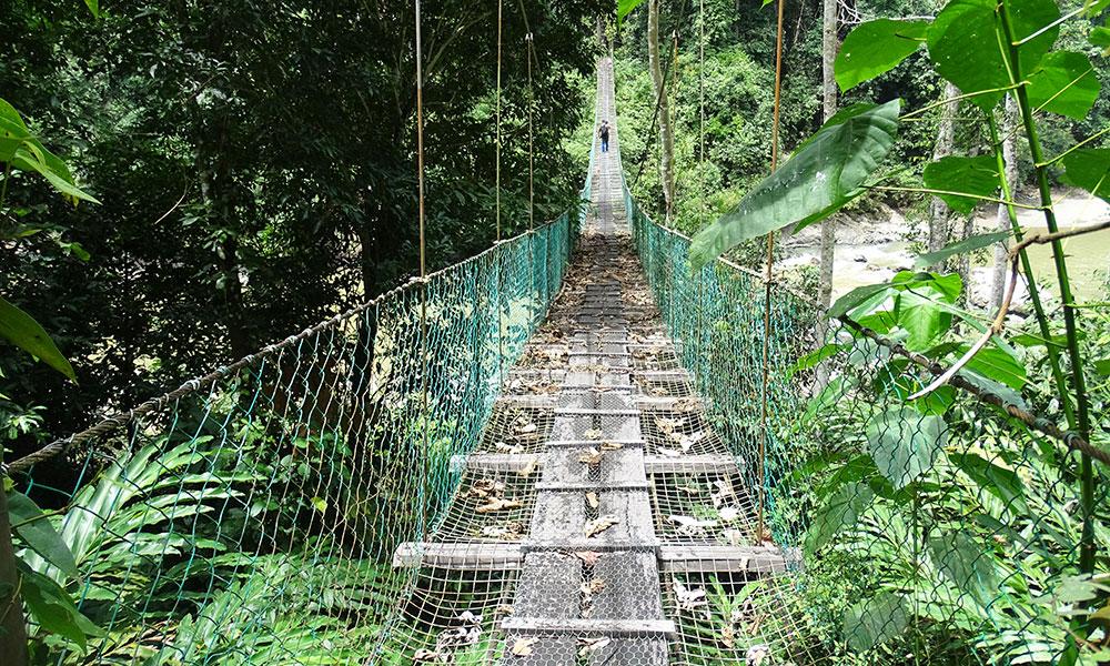 Hängebrücke über den Fluss im Danum Valley