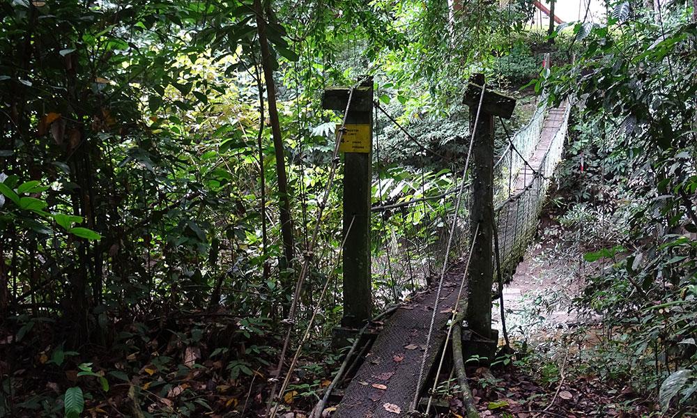 Hängebrücke im Dschungel im Danum Valley