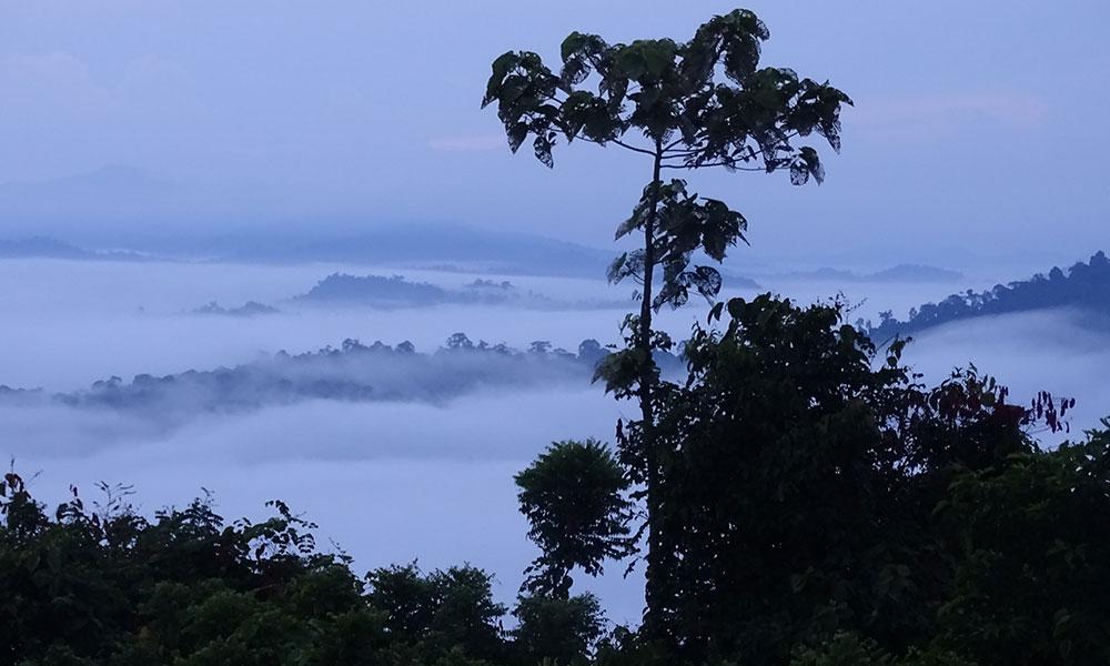Bäume über den Wolken im Danum Valley