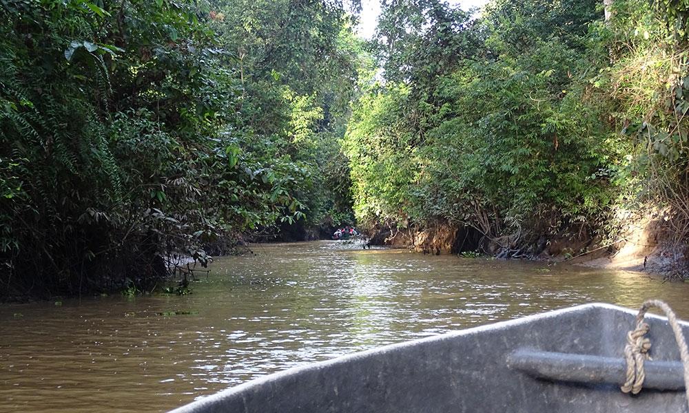Boot auf dem Kinabatangan River