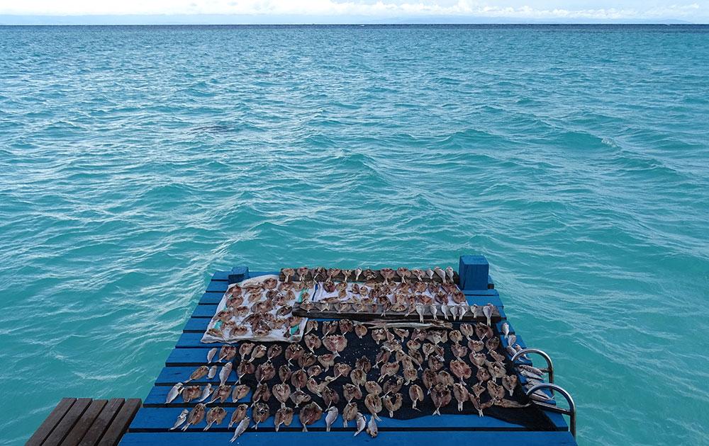 Fische am Meer zum Trocken ausgelegt
