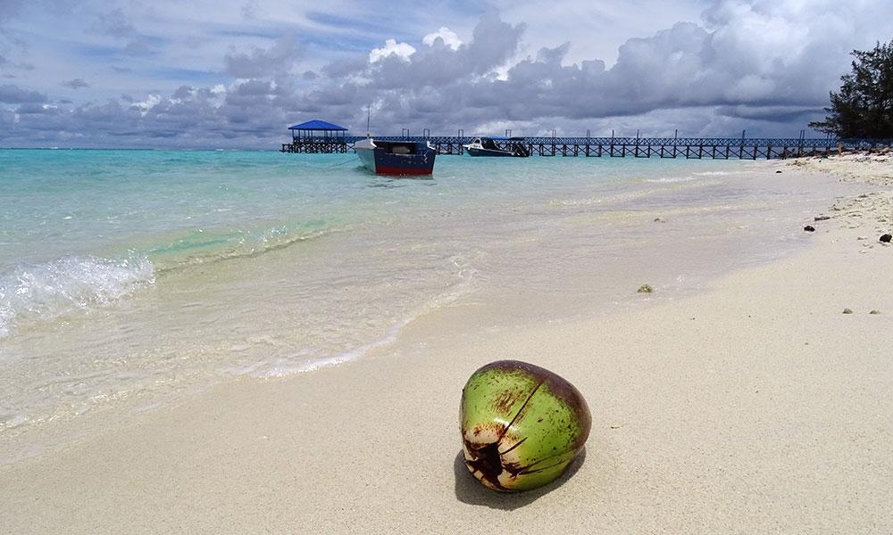 Strand mit Kokosnuss am blauen Meer in Borneo