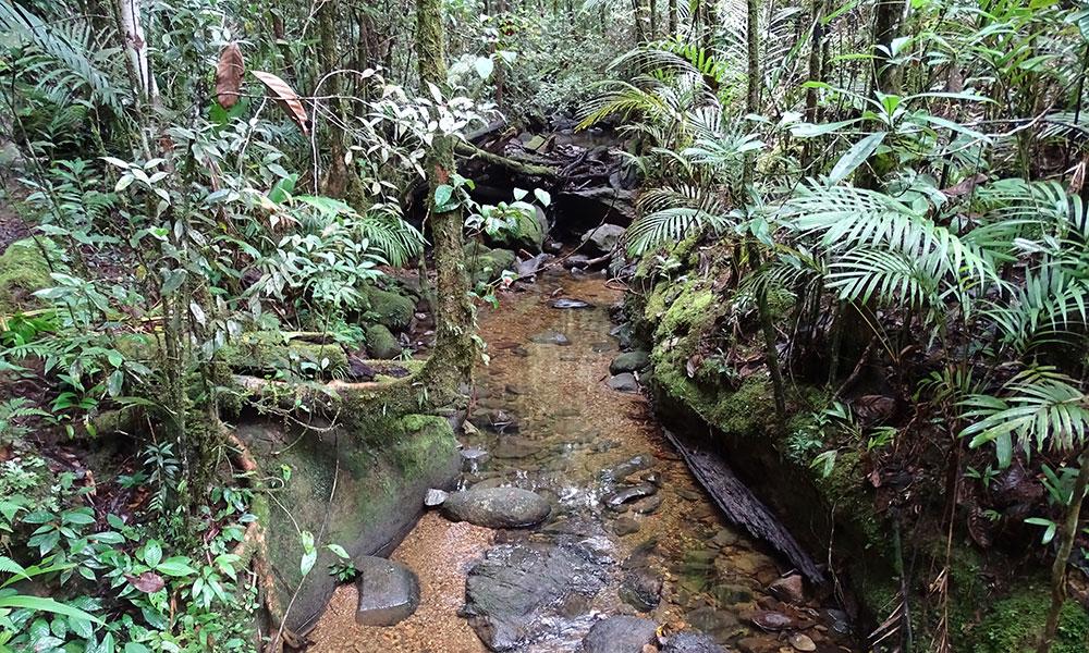 Bach im Wald am Mount Kinabalu