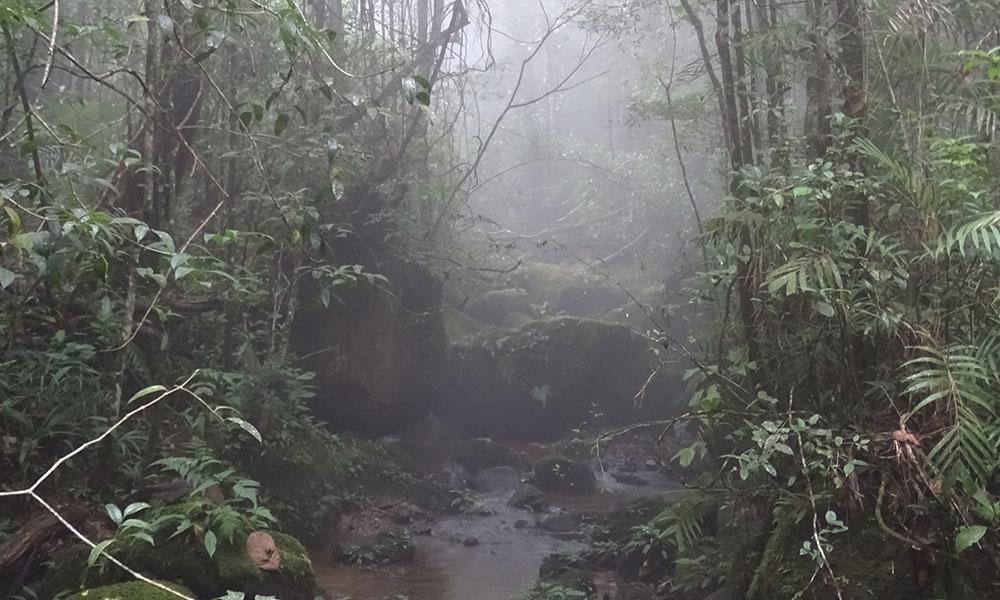 Nebel im Wald am Mount Kinabalu