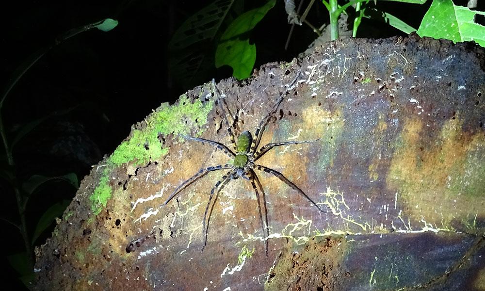 Große Spinne auf einem Stein