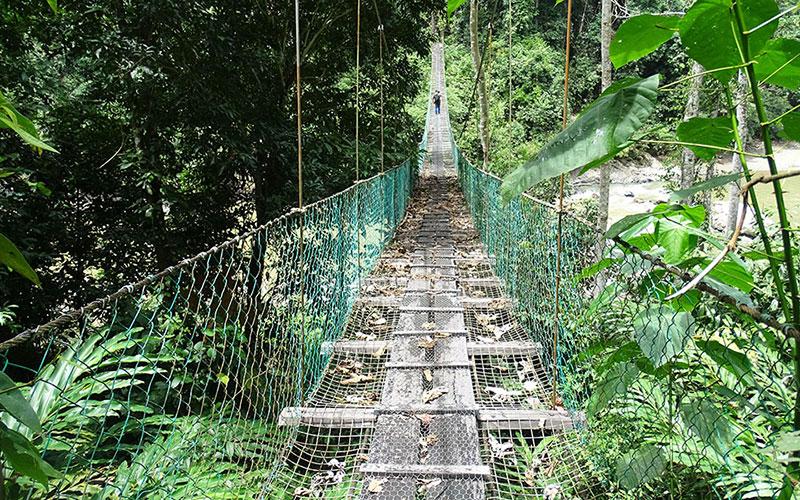 Hängebrücke in Danum Valley