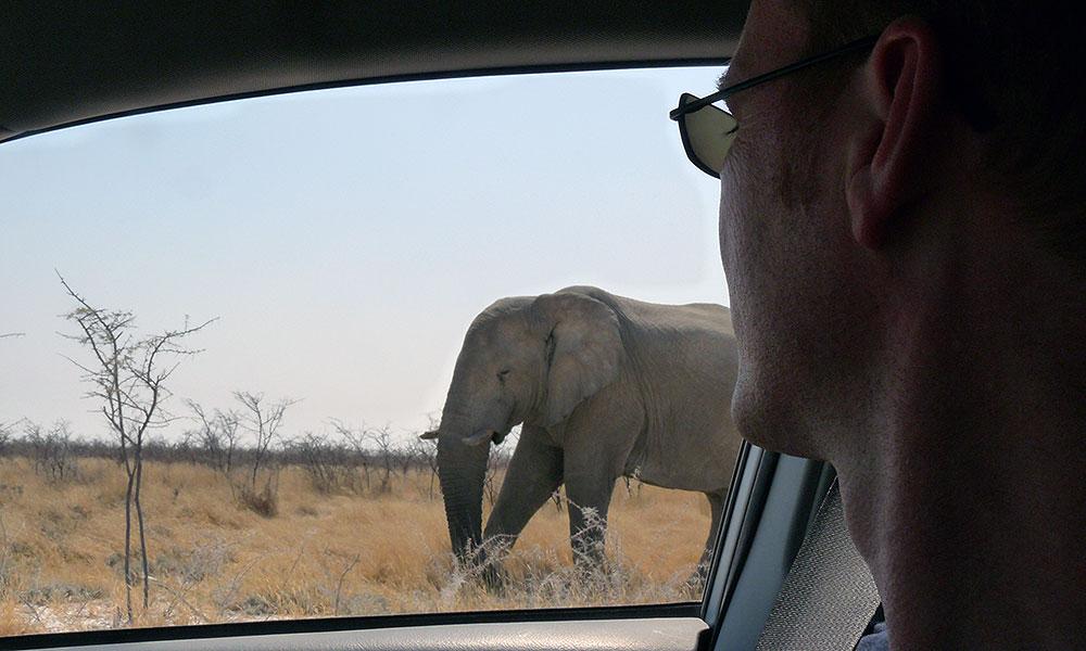 Elefant direkt neben dem Auto im Etosha Nationalpark