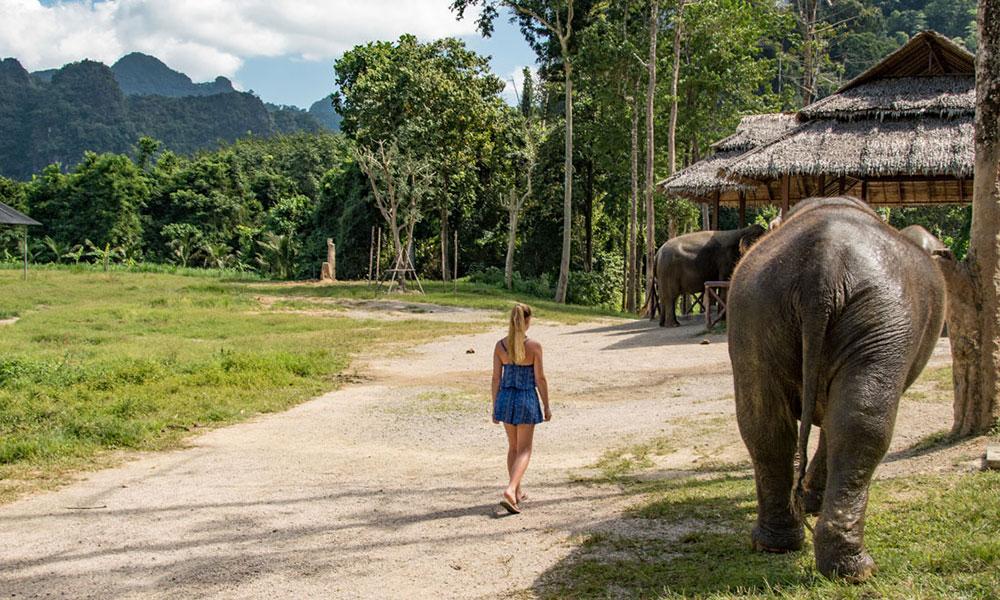 Elefanten im Khao Sok Nationalpark